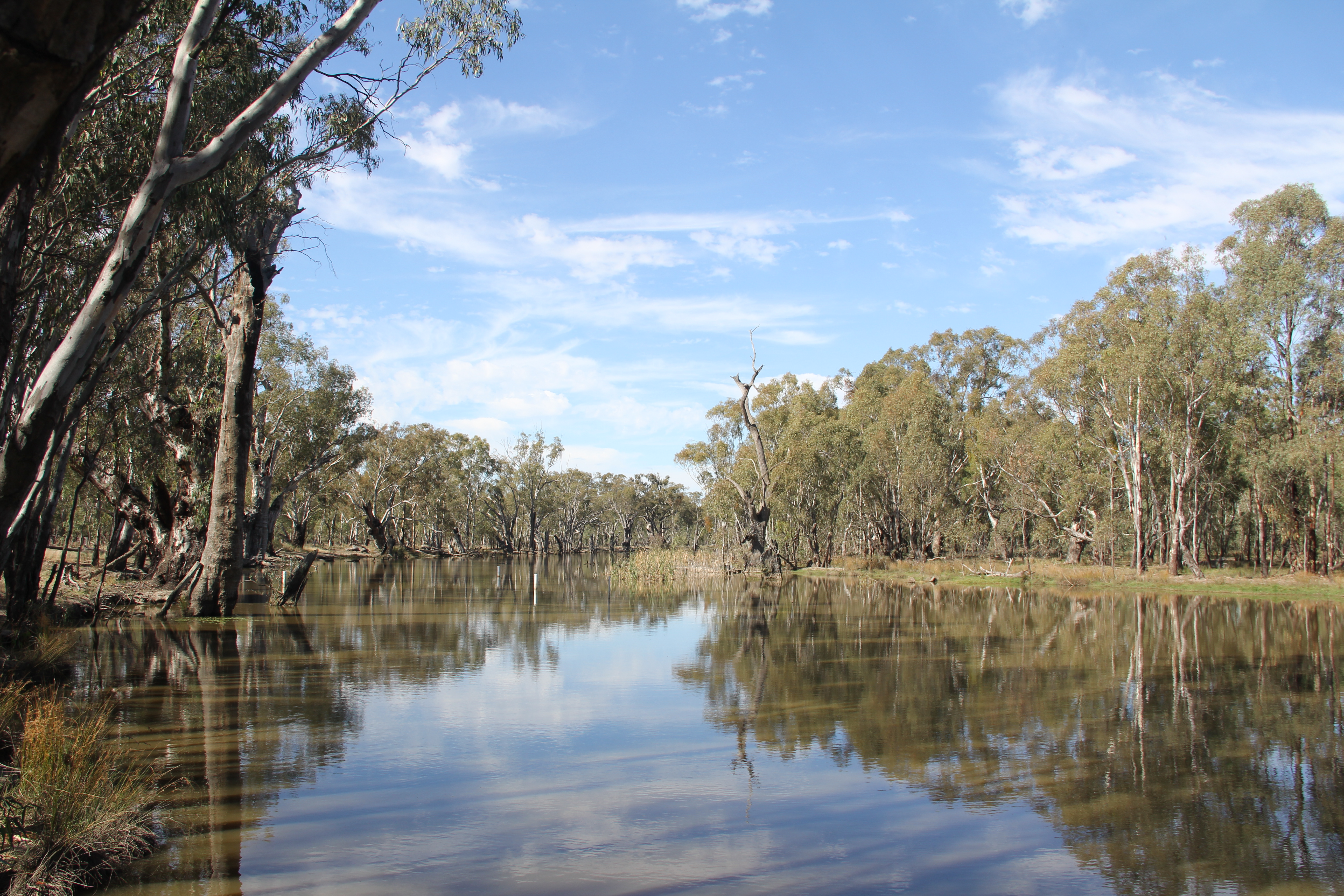 View of the Murray River at Barmah. The river is known to Yorta Yorta people as the Dungala.  Photograph by Shane Charles
