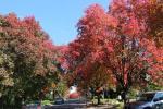 Robe Street, Deakin, Canberra (photo: Grahamec on Wikimedia Commons)